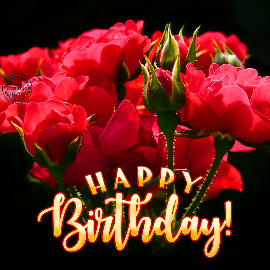 Red Roses Birthday Card Card 226 Category Birthday Cards