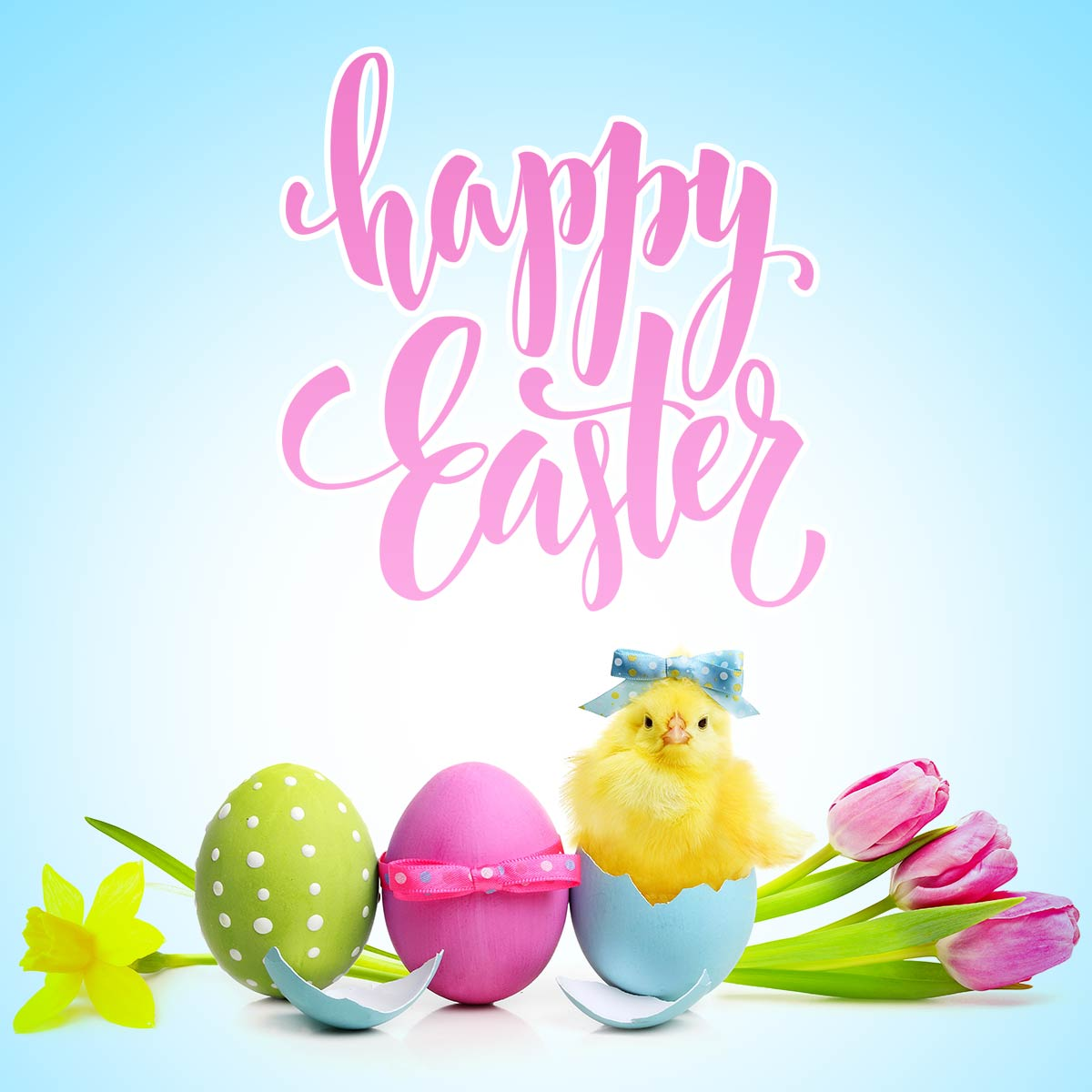 Pastel Color Easter Card with Cute Chick, Eggs and Tulips
