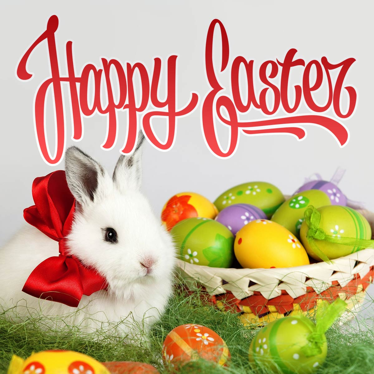 Cute Bunny and Painted Easter Eggs Greeting Card