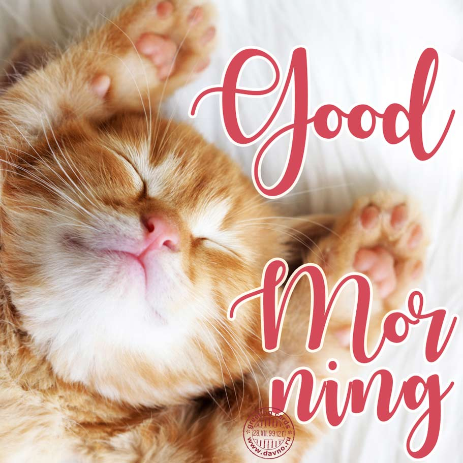 Good morning card with a cute cat