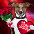 Cute and funny dog birthday card
