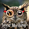 Funny Good Morning Owl Picture